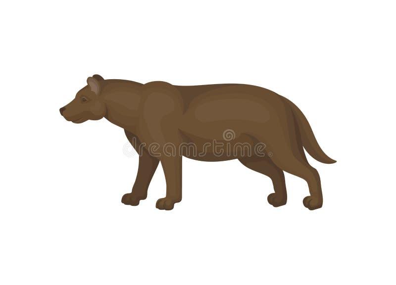 Conception plate de vecteur d'epicyon brun, vue de côté Période glaciaire animale mammifère puissante de forme Grande bête éteint illustration stock