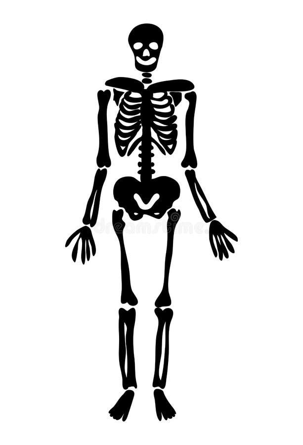 Conception squelettique d'icône de symbole de vecteur de Halloween illustration libre de droits