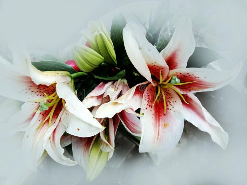 Conception texturisée de fond d'abrégé sur fleur d'Alstromeria, illustration images stock
