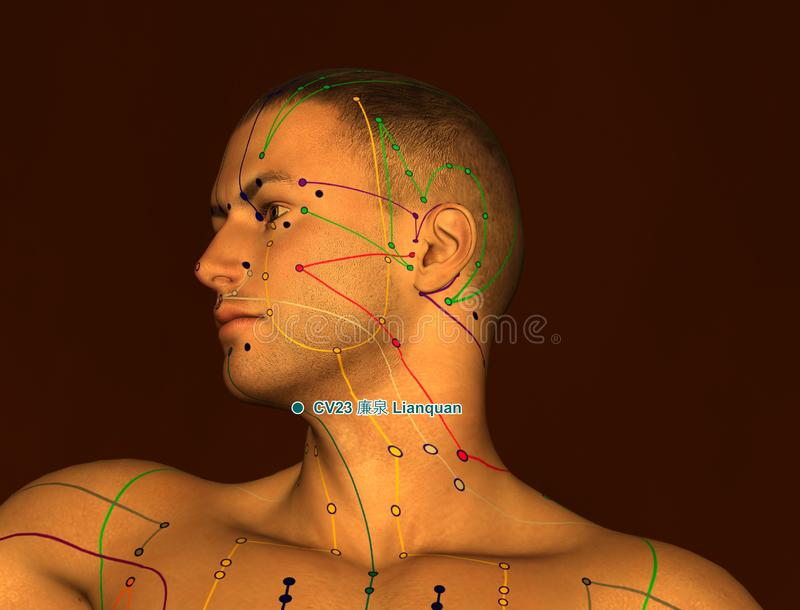 Acupuncture Point CV23 Lianquan, 3D Illustration, Brown Background stock images