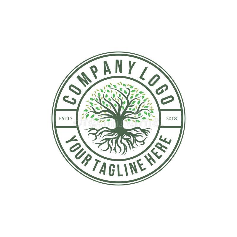 Conceptions de logo d'olive ou de chêne, style de cru illustration libre de droits