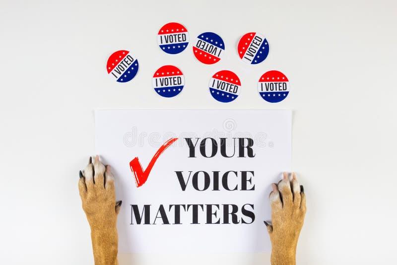 Concepto americano del activismo de la elección con las patas del perro fotos de archivo