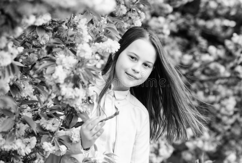 Concepto arom?tico del flor Turista de la muchacha que presenta cerca de Sakura Floraci?n blanda Ni?o en las flores rosadas del f fotos de archivo