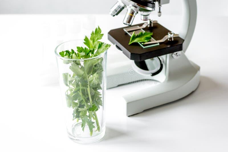 Concepto - compruebe los suplementos dietéticos en laboratorio en el microscopio imágenes de archivo libres de regalías