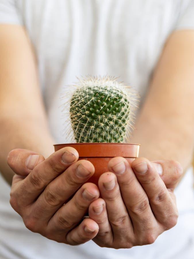 concepto con un hombre joven en la camisa, sosteniendo un cactus con sus manos sugiriendo cuidado imagen de archivo