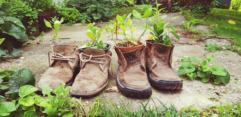 Concepto creativo de los zapatos de la planta de la decoración de la materia vieja vieja de la reutilización imagen de archivo libre de regalías