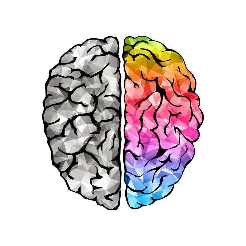 Concepto creativo del cerebro humano stock de ilustración
