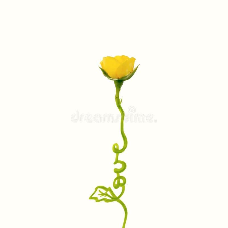 Concepto creativo hecho de la flor color de rosa amarilla con amor de la palabra Endecha plana Concepto del día de tarjetas del d ilustración del vector