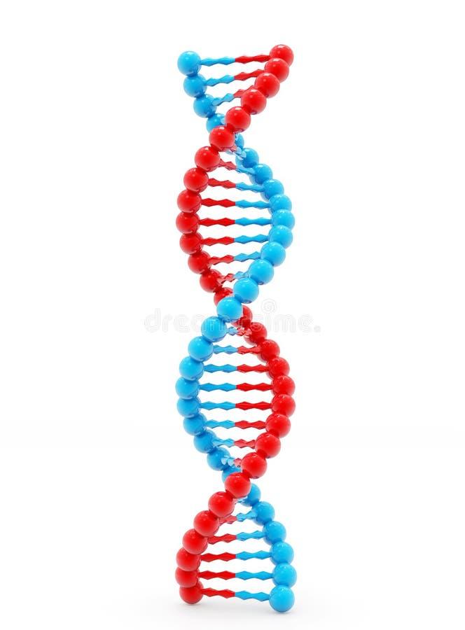 Concepto de bioquímica con la molécula de la DNA aislada en el fondo blanco, representación 3d libre illustration