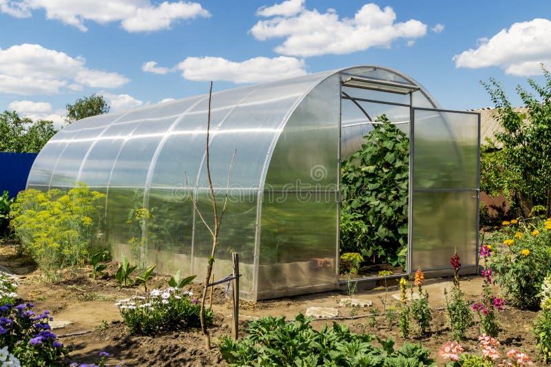 Concepto de cultivar un huerto, de la comida sana y de productos del eco El pequeño invernadero con los tomates y los pepinos cre fotografía de archivo