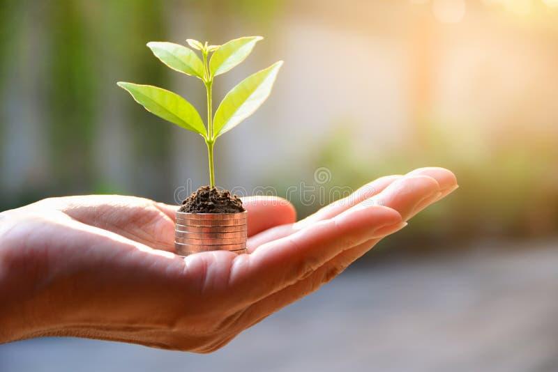 Concepto de dinero con la planta que crece de monedas a disposición Financia foto de archivo libre de regalías