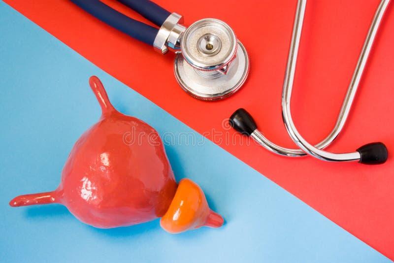 Concepto de diseño de la diagnosis y enfermedades de la detección del órgano del sistema urinario - vejiga y próstata Estetoscopi imágenes de archivo libres de regalías