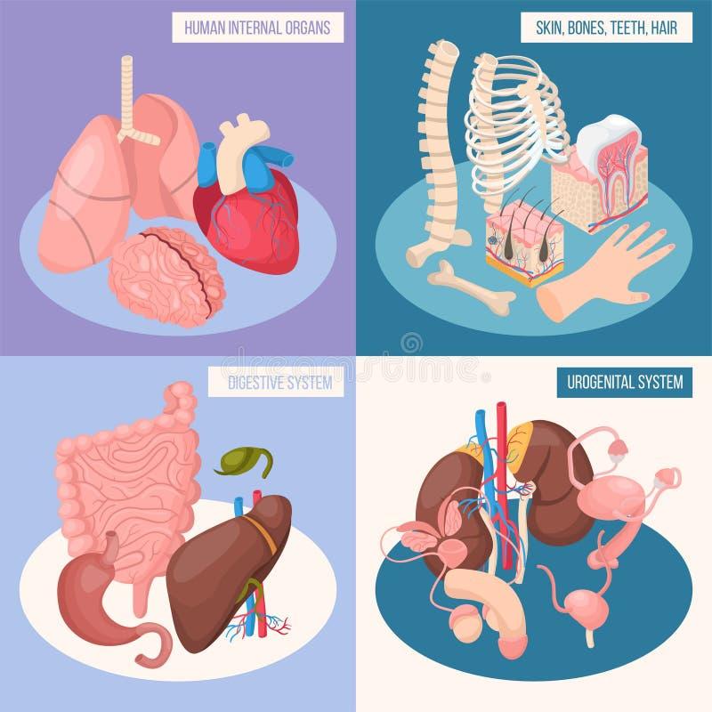 Concepto de diseño de los órganos humanos 2x2 libre illustration