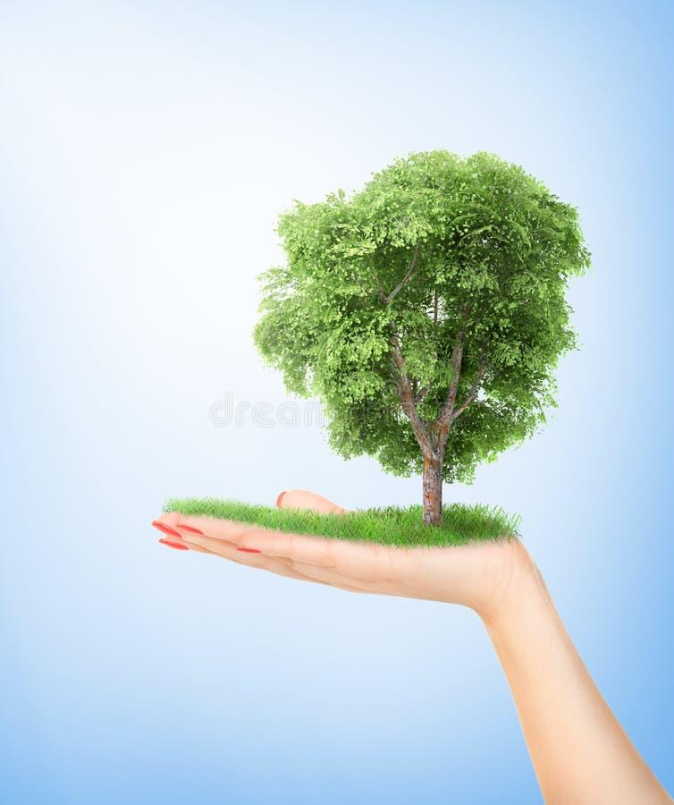Concepto de Eco Mano de la naturaleza que sostiene un árbol grande foto de archivo libre de regalías