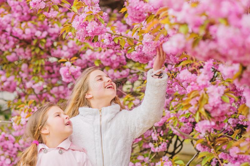 Concepto de la bot?nica Nubes rosadas suaves de las flores Los ni?os disfrutan de la primavera caliente Muchachas que presentan c foto de archivo