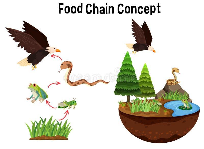 Concepto de la cadena alimentaria de la ciencia ilustración del vector
