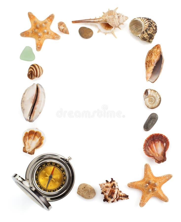 Concepto de la concha marina y del mar en blanco imagenes de archivo
