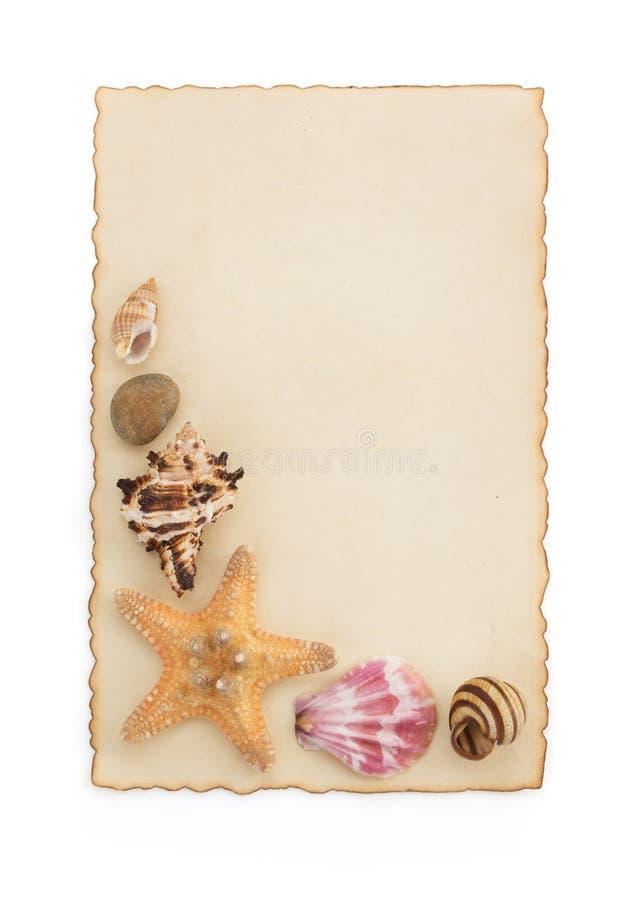 Concepto de la concha marina y del mar en blanco foto de archivo