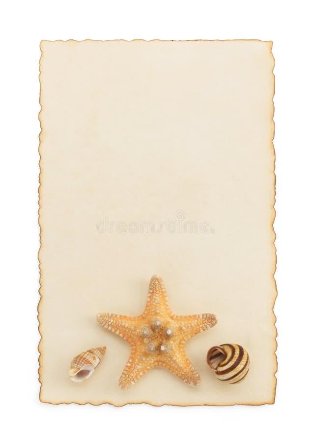 Concepto de la concha marina y del mar en blanco imagen de archivo