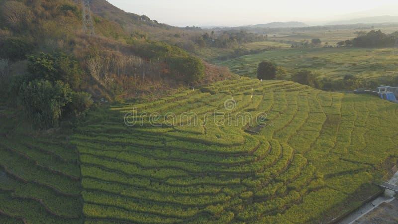 Concepto de la construcción de terrazas de la planta de arroz foto de archivo