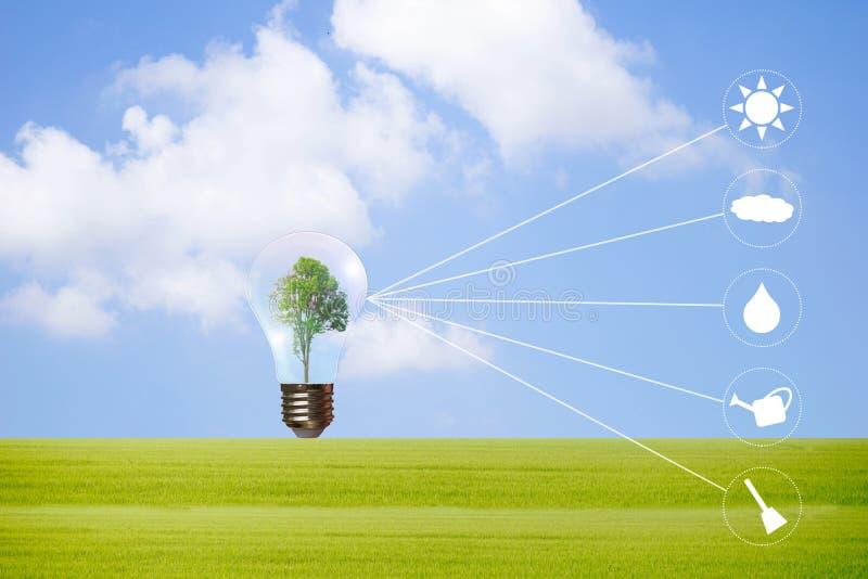 Concepto de la ecología que sostiene el árbol grande de la planta en bombilla con el icono 4 del ambiente mundial foto de archivo