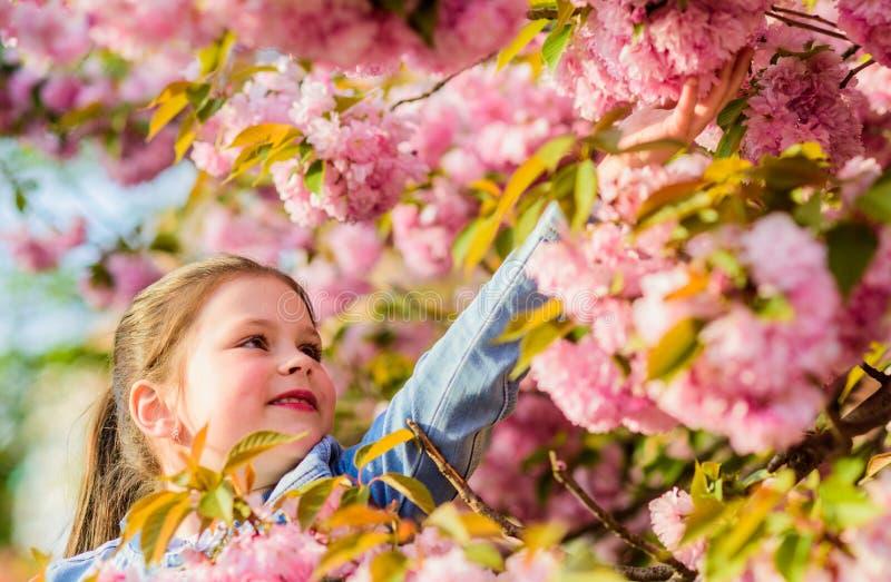 Concepto de la flor de Sakura E r fotografía de archivo