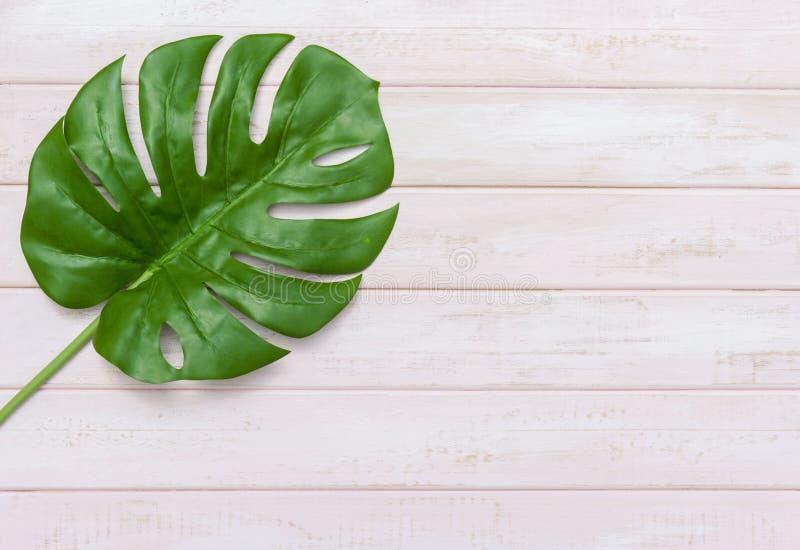Concepto de las ideas del verano con la frontera tropical del marco de la hoja en fondo de madera en colores pastel del rosa con  foto de archivo