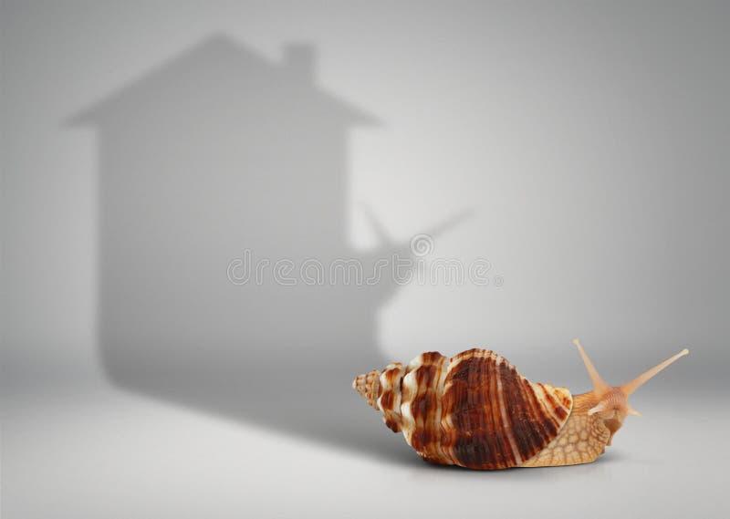 Concepto de las propiedades inmobiliarias, caracol con la casa de la sombra fotografía de archivo