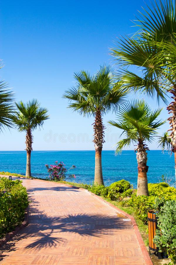 Concepto de las vacaciones de verano - palmas en la playa fotografía de archivo