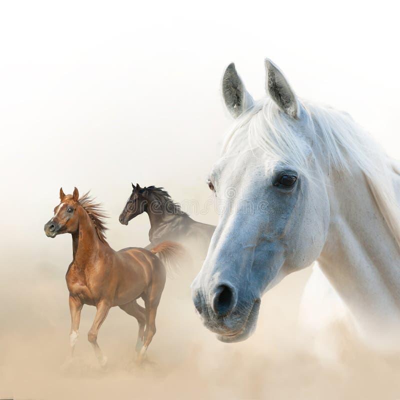 Concepto de los caballos salvajes fotografía de archivo libre de regalías