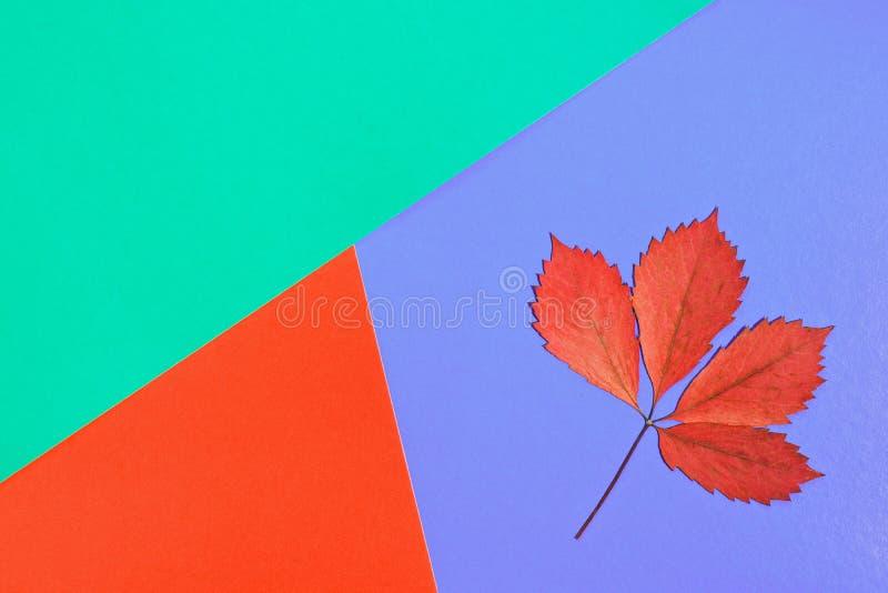 Concepto de Minimalistic de otoño Seque la hoja roja del otoño en un fondo en colores pastel multicolor foto de archivo