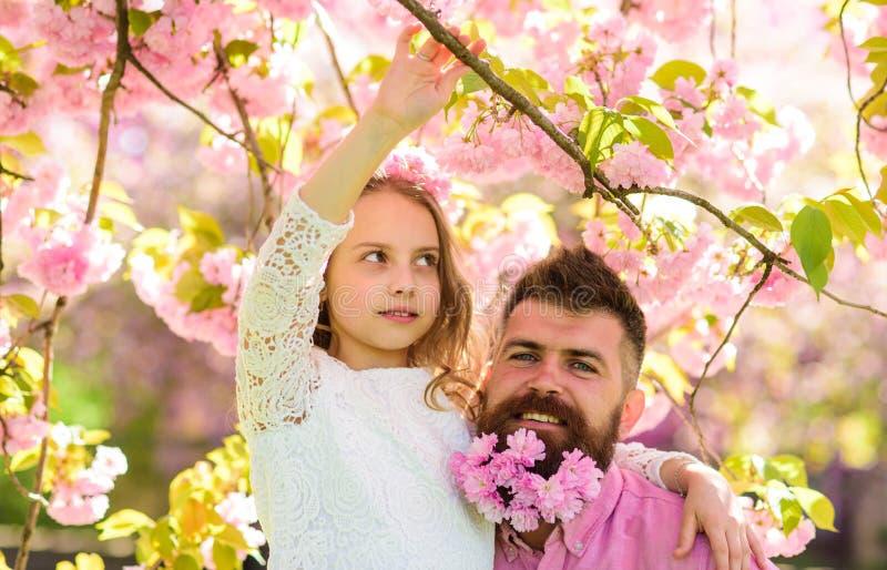 Concepto de niña del ocio El padre y la hija en caras felices abraza, fondo de Sakura Niño y hombre con rosa blando imagen de archivo libre de regalías