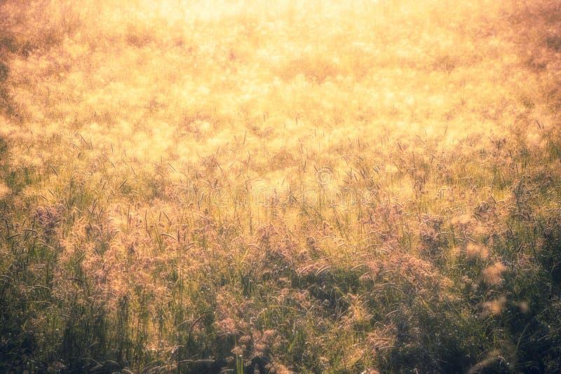 Concepto de oro del fondo del extracto de la naturaleza, foco suave, bokeh, wa fotos de archivo libres de regalías