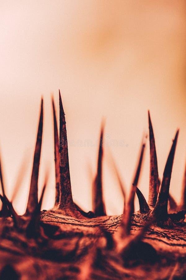 Concepto de Thorn Spike Dry Deserted Abandoned Abstract fotografía de archivo libre de regalías