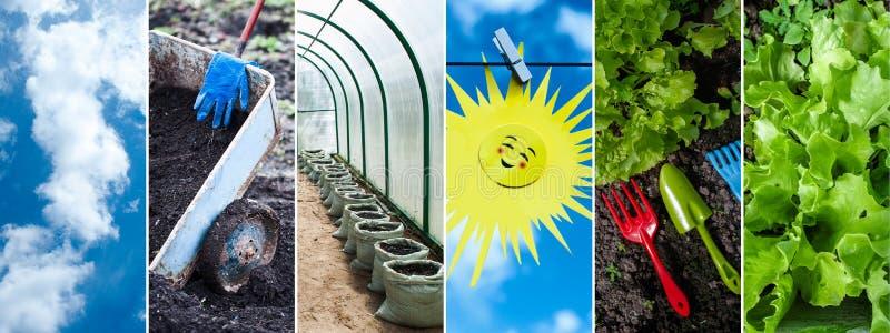 Concepto de verduras crecientes, verdes, collage Tierra negra, pla fotos de archivo libres de regalías