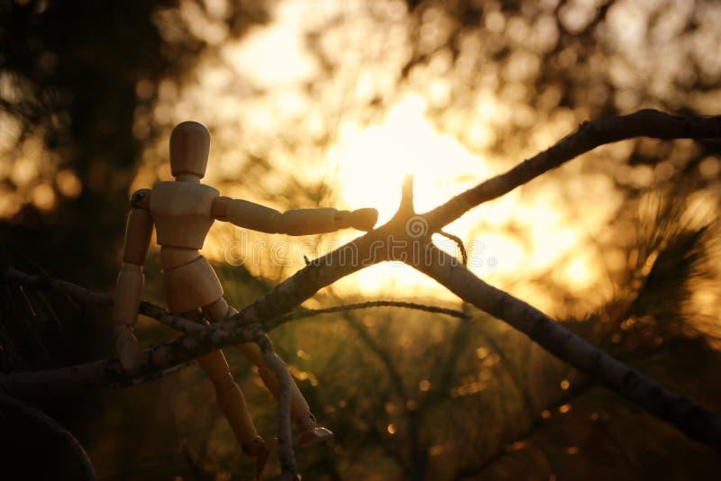 concepto de visión y de diverso pensamiento sentada simulada de madera encima del pico del árbol que mira adelante imagen de archivo