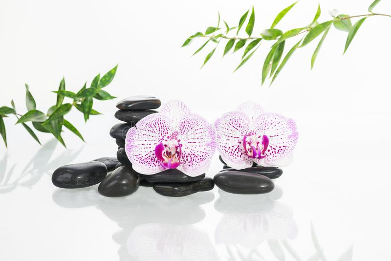Concepto del balneario con las orquídeas del Phalaenopsis, los ZENES Stone y las hojas del bambú fotos de archivo libres de regalías