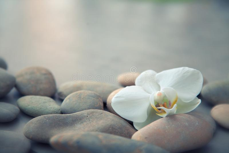 Concepto del balneario con las piedras del basalto y la orquídea blanca imágenes de archivo libres de regalías