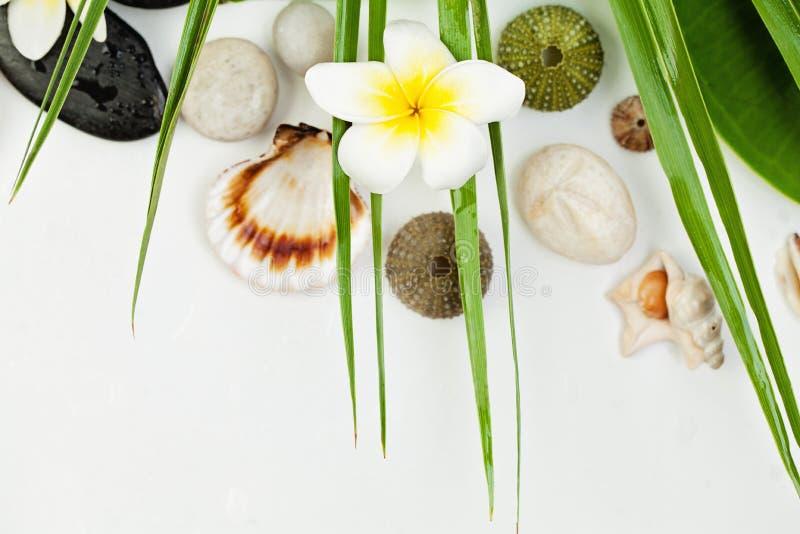 Concepto del balneario en el fondo blanco, las hojas de palma, la flor tropical, la cáscara y las piedras, visión superior, espac imagenes de archivo