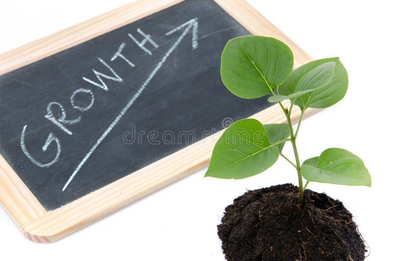 Concepto del crecimiento con una pequeña planta verde imagenes de archivo