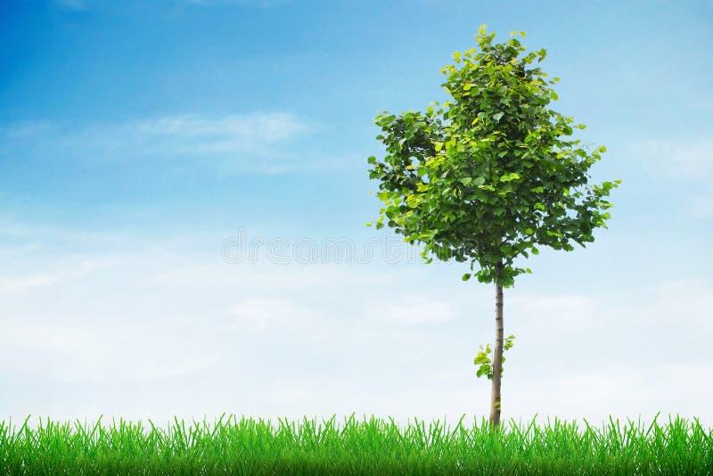 Concepto del crecimiento en primavera imagen de archivo libre de regalías