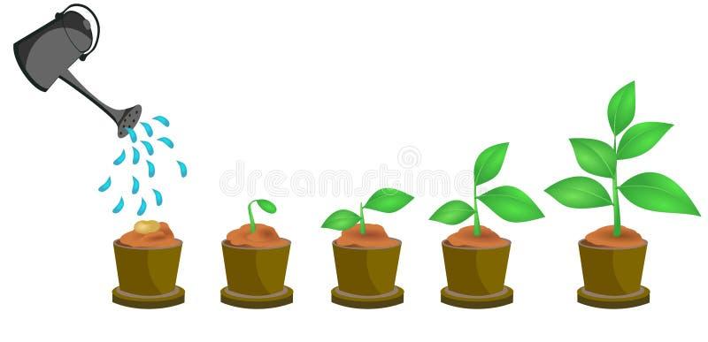 Concepto del crecimiento vegetal stock de ilustración