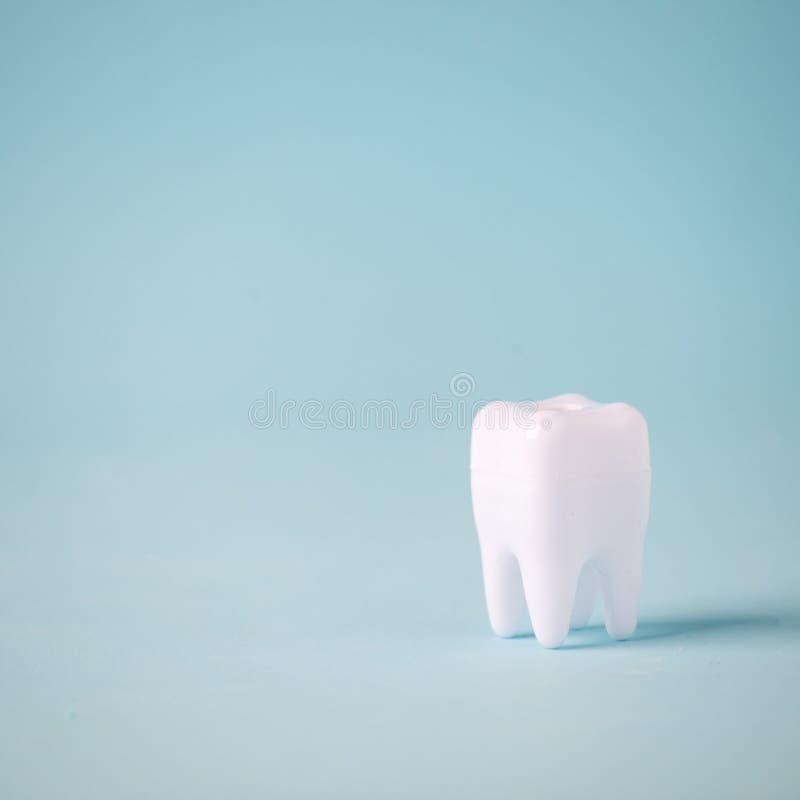 Concepto del cuidado dental, modelo sano del diente en fondo azul con el espacio de la copia Odontología mínima, concepto oral de foto de archivo libre de regalías