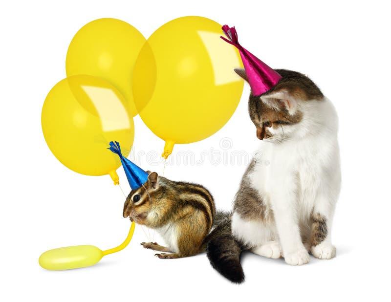 Concepto del cumpleaños, gato divertido y ardilla listada con los globos foto de archivo libre de regalías