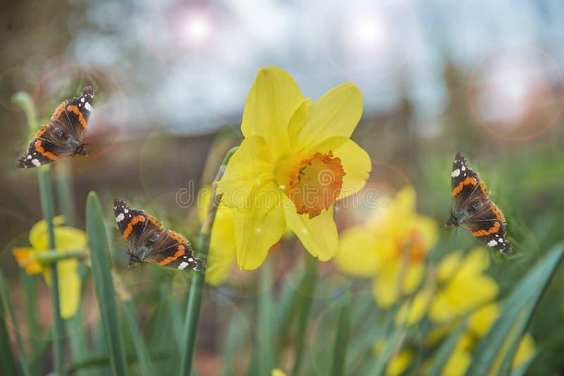 Concepto del día de fiesta de Pascua o de la primavera foto de archivo