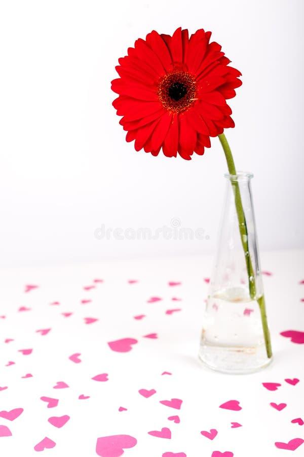 Concepto del día de tarjetas del día de San Valentín del santo Dimensión de una variable roja del corazón Flor roja del Gerbera e foto de archivo libre de regalías