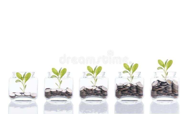 Concepto del dinero del ahorro, mano del negocio que pone el árbol creciente de la pila de la moneda del dinero en la hucha imagen de archivo