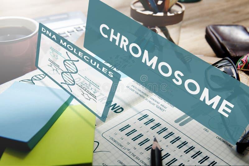 Concepto del experimento de la ciencia de las moléculas de la DNA del cromosoma imagen de archivo