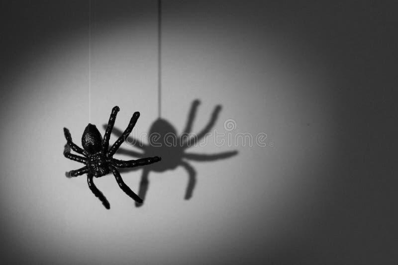 Concepto del fondo de Halloween Sombra de la araña y hangi de la silueta imagen de archivo libre de regalías
