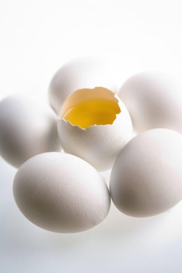 Concepto del huevo imagenes de archivo